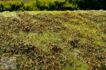 Alacsony bokros kora őszi táj - dioráma lap