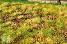 Kora nyári táj száraz és zöld fűcsomókkal - dioráma lap