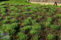 Erdei talaj - fűlap