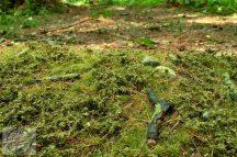 Tavaszi erdei talaj - fűlap