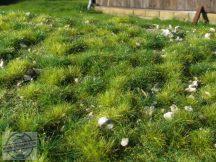 Kora nyári apróköves talaj - fűlap