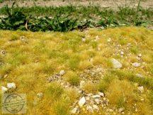 Késő nyári apróköves talaj - fűlap