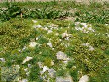 Kora nyári köves talaj - fűlap