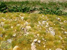Késő nyári köves talaj - fűlap