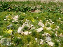 Kora nyári talaj sok kővel - fűlap