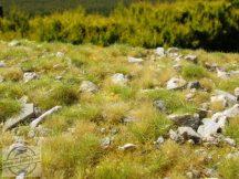 Késő nyári talaj sok kővel - fűlap